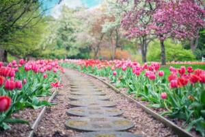 Betonplatten führen durch Tulpen