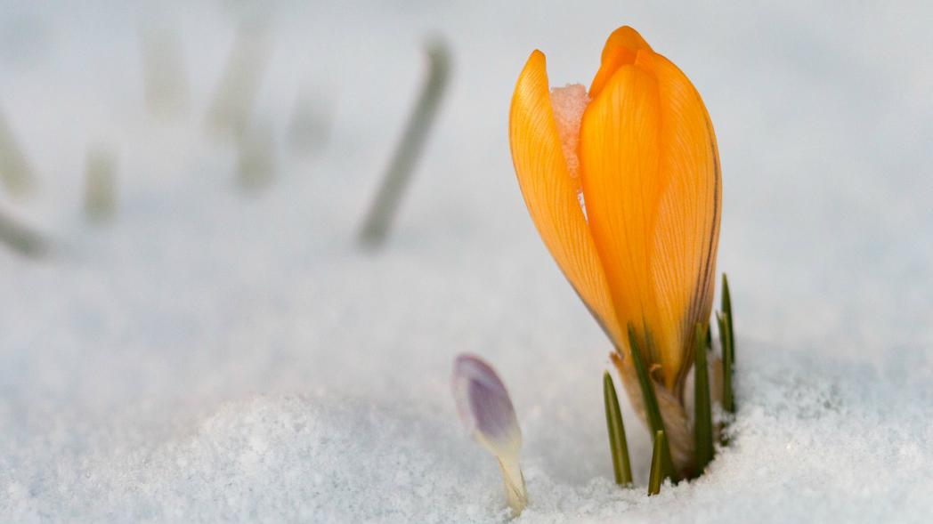 Der Frühling kommt. Bild: verena-timtschenko - pixabay