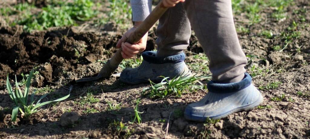 Umgraben ist anstrengend, aber dringend nötig, wenn man Rollrasen verlegen möchte.