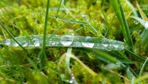 Moos durchzieht oft den Rasen.