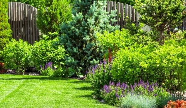 Ein Garten mit Blumen und Sträuchern