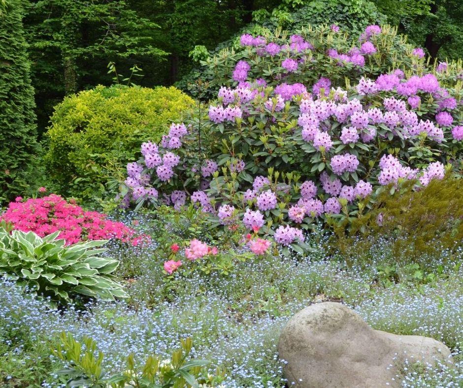 Pflanzenvielfalt für Bienen im Garten